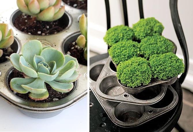 vieux-plat-a-gateaux_pot-pour-plantes